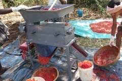 thumbs_Hot-pepper-seed-extraction-in-field