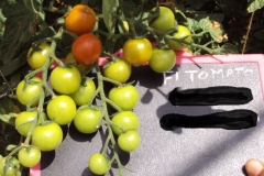 PS-172-female-fruit-UK