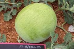 Watermelon-602-fruit